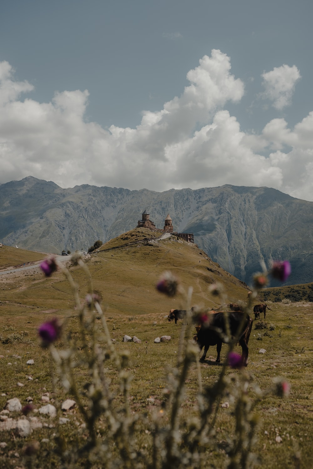 horses on green grass field near mountains under white clouds and blue sky during daytime