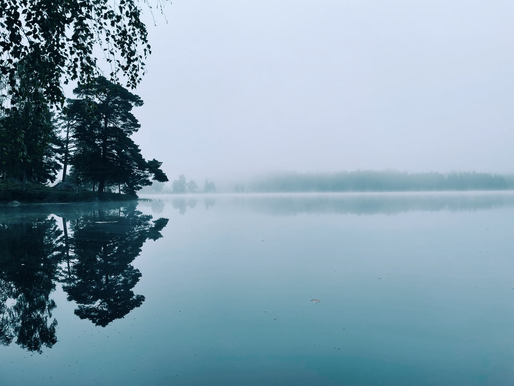 body of water near trees during foggy weather