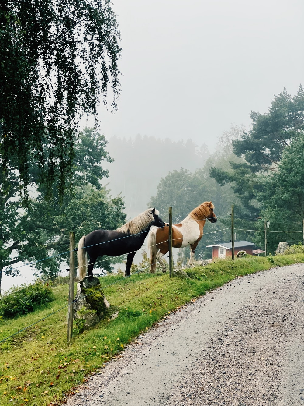 brown and white horse on dirt road during daytime