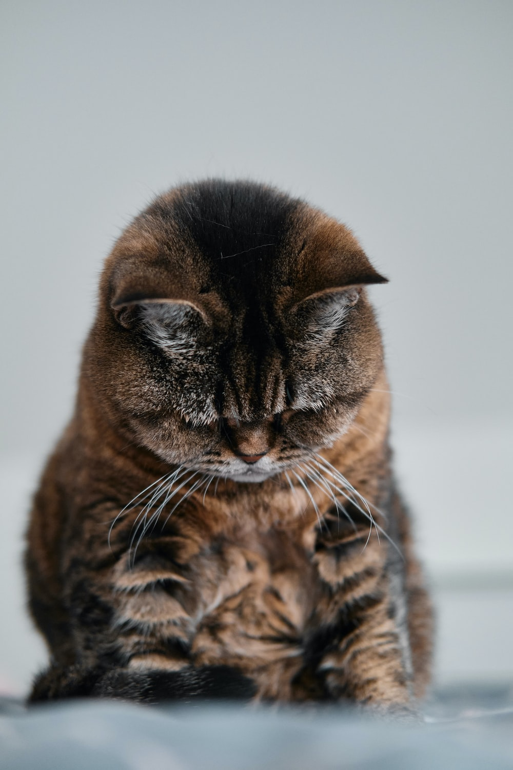 brown tabby cat on white surface