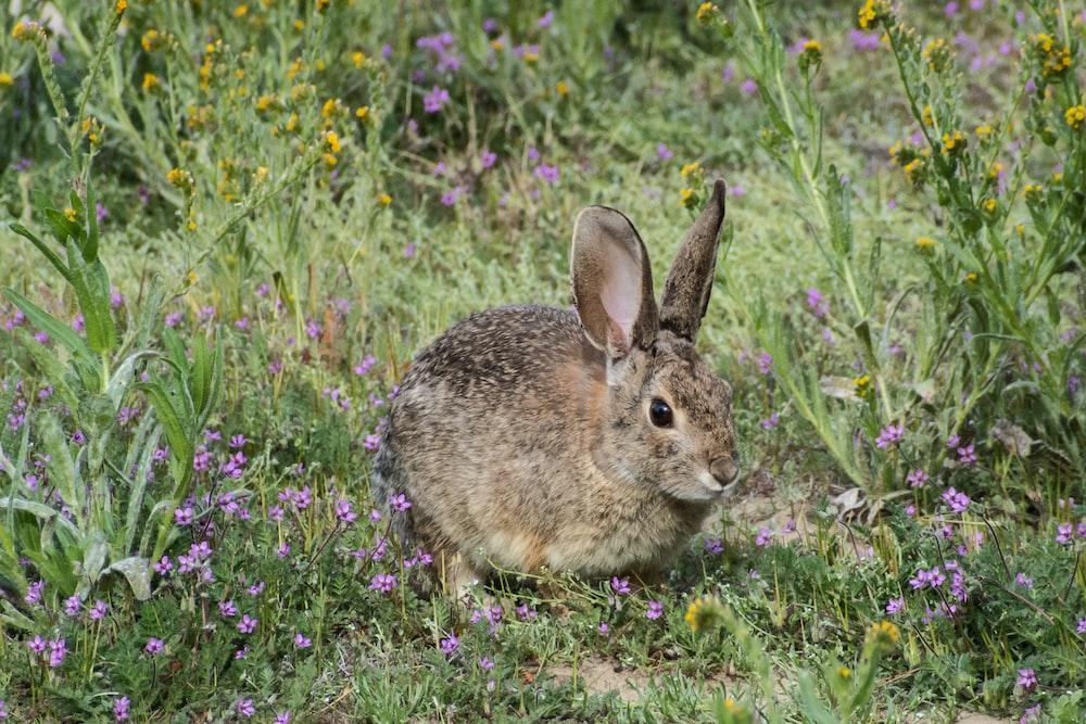 brown rabbit on purple flower field during daytime