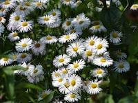 daisy-chainable