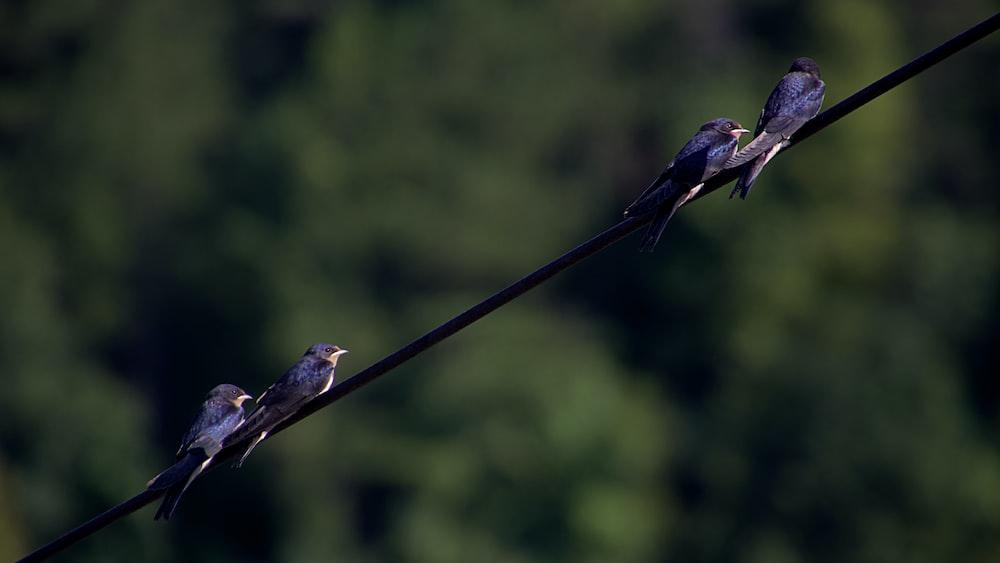 brown bird on black wire during daytime