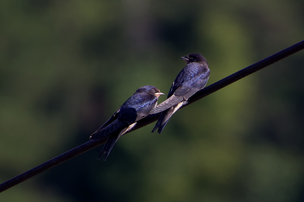 brown and gray bird on brown stick
