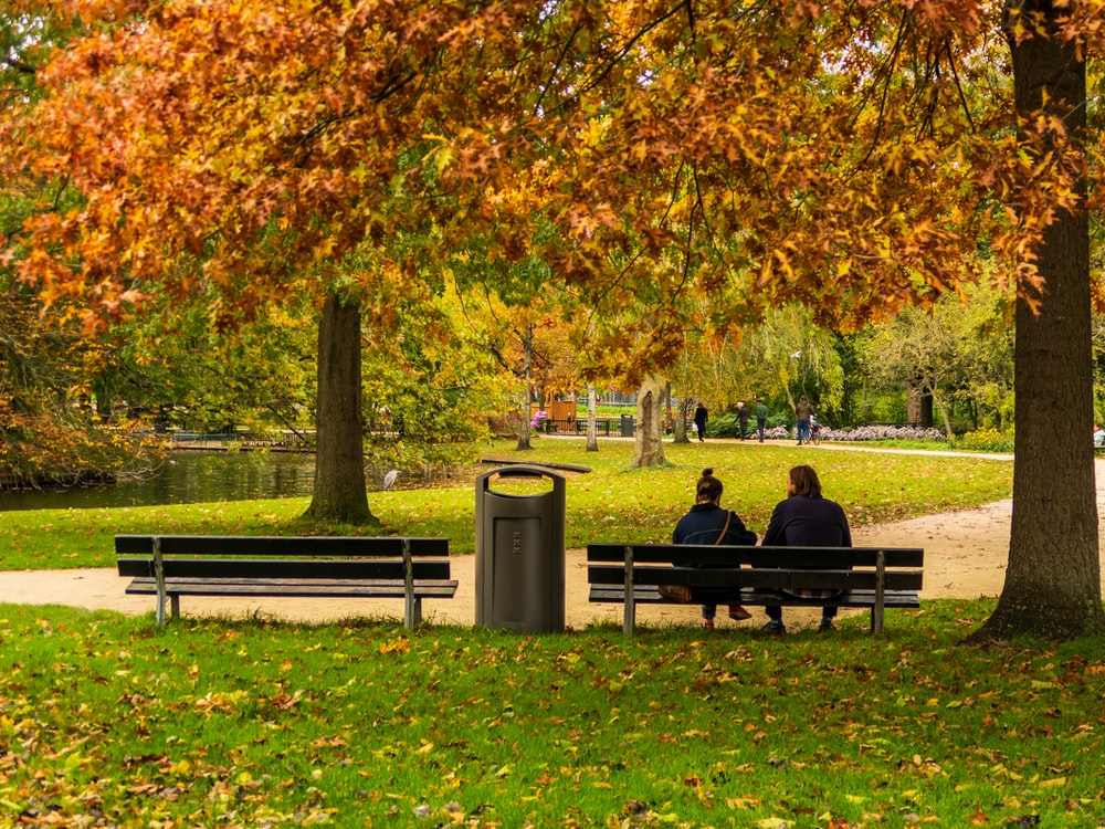 couple sitting on bench near trees during daytime