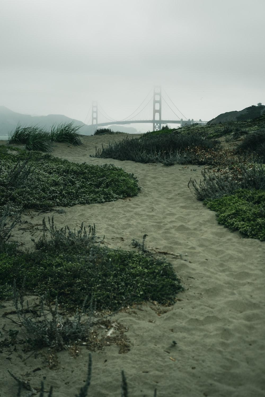 green trees on white sand during daytime