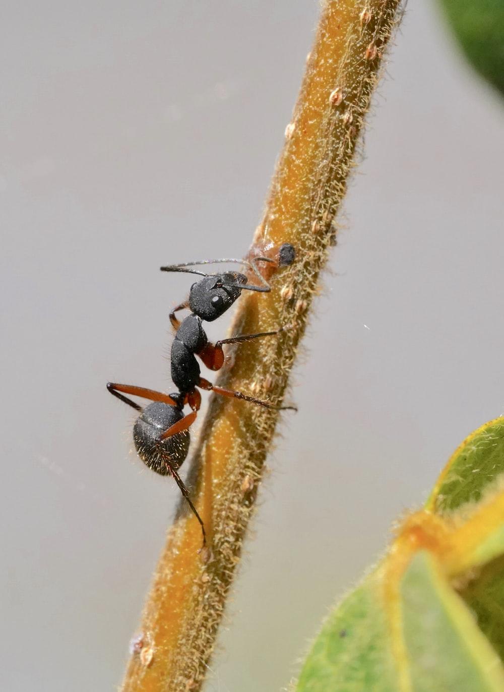 black ant on white surface