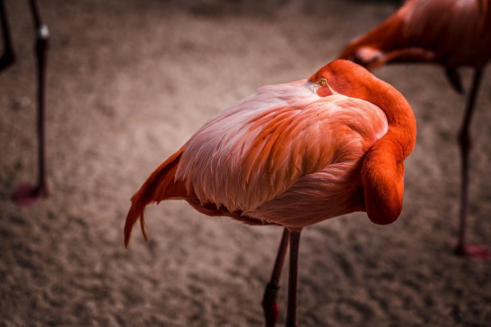 pink flamingo on gray sand during daytime