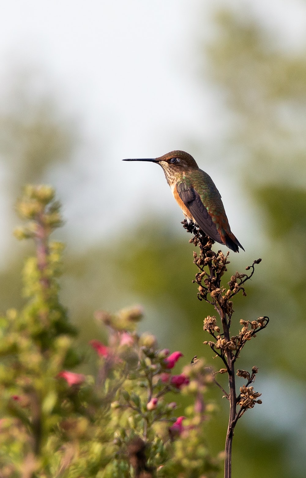 brown and green humming bird on green plant during daytime