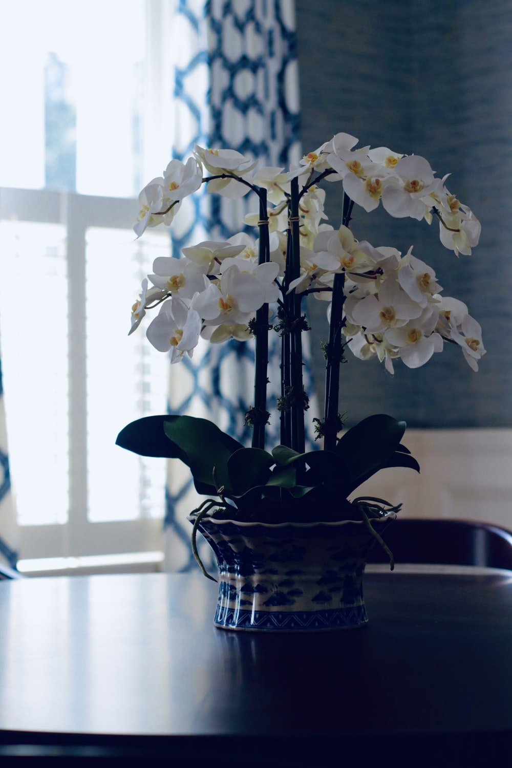 white moth orchids in brown wicker basket