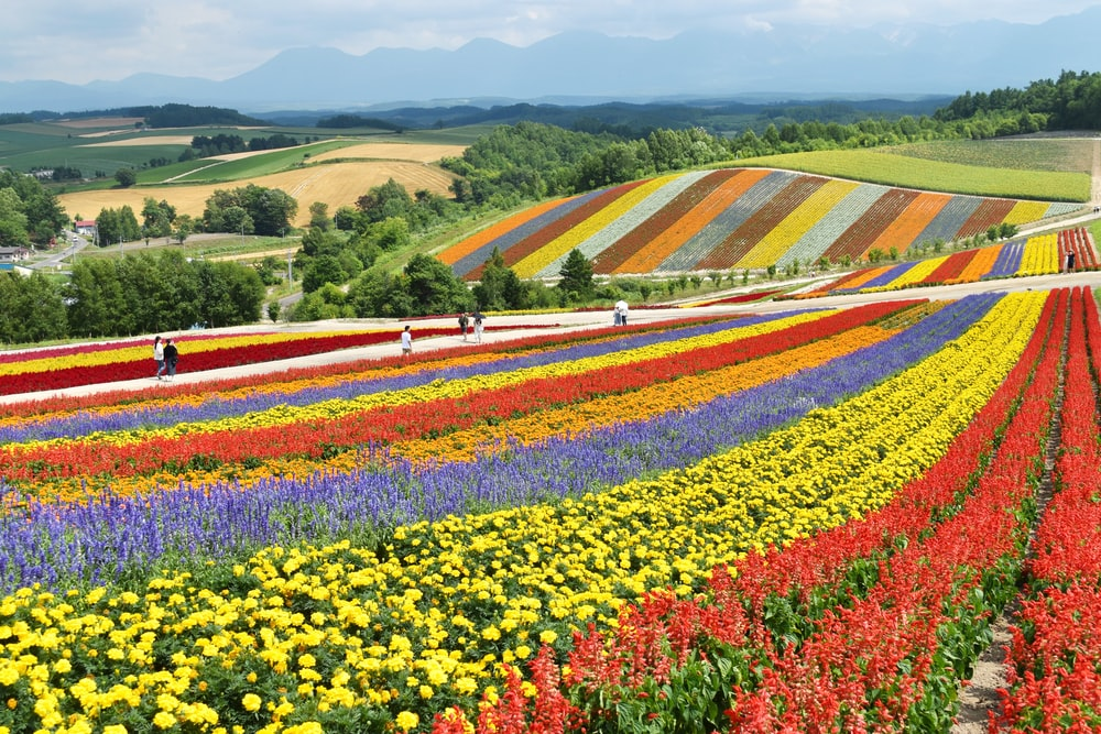yellow red and purple flower field during daytime