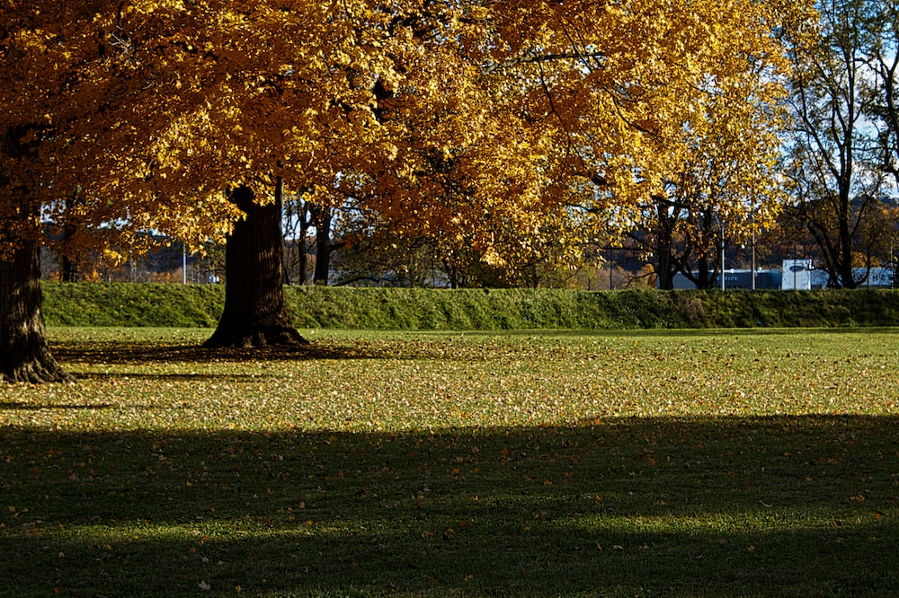 people walking on green grass field near brown leaf trees during daytime