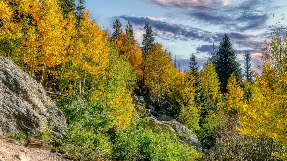 green and yellow trees under white clouds and blue sky during daytime