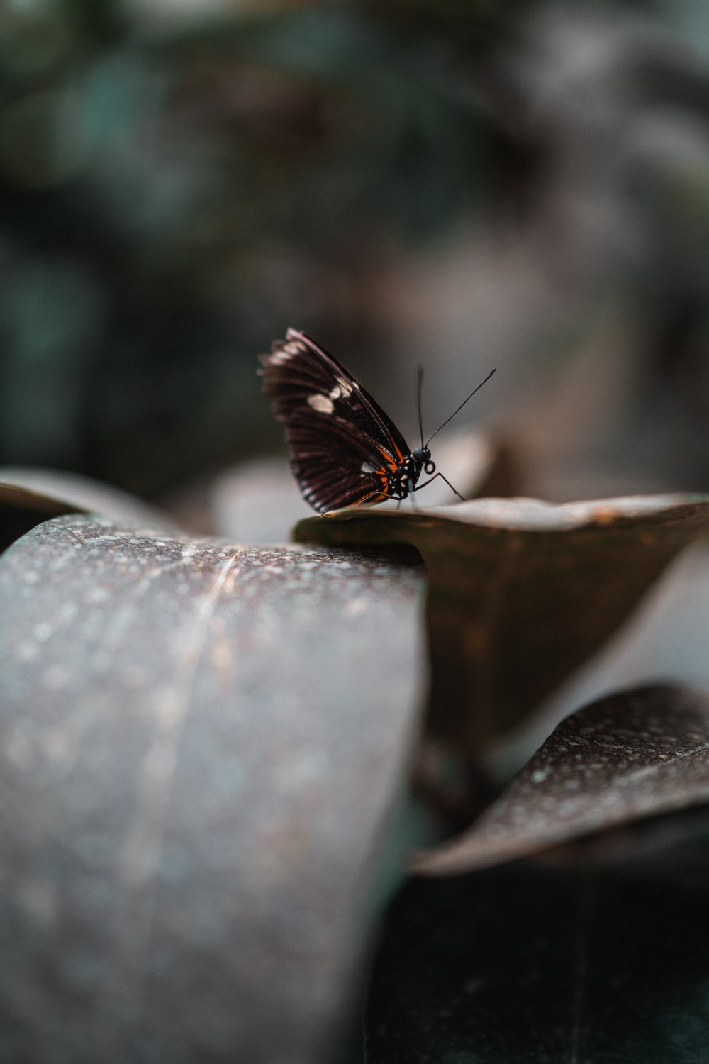 brown and white butterfly on brown wood