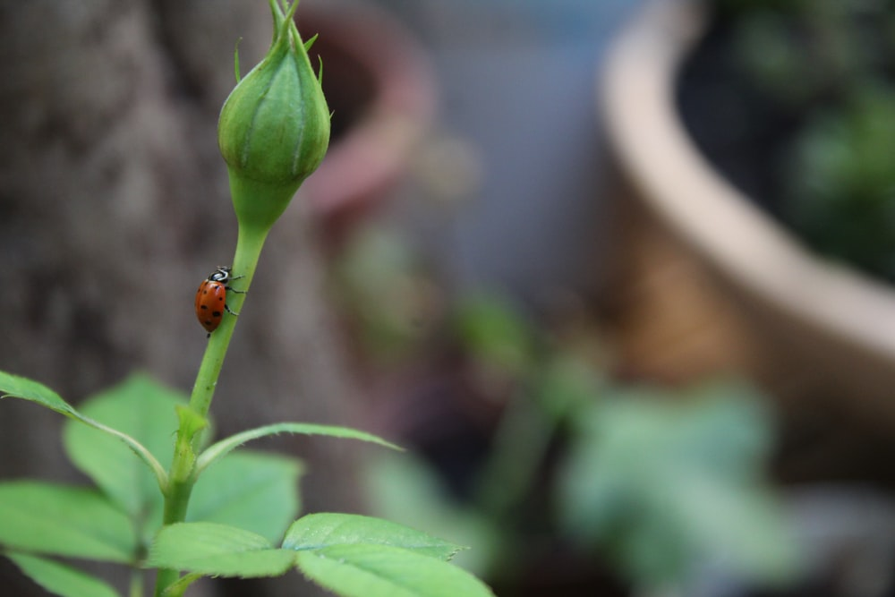 red ladybug perched on green leaf in close up photography during daytime