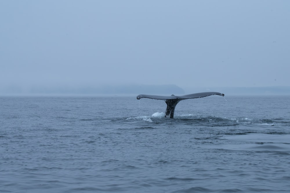 black whale on blue sea during daytime