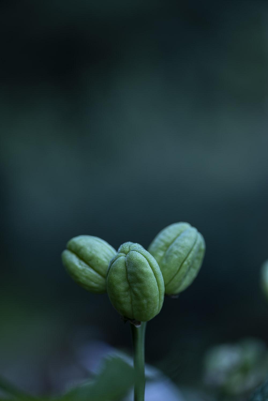 green heart shaped leaf plant