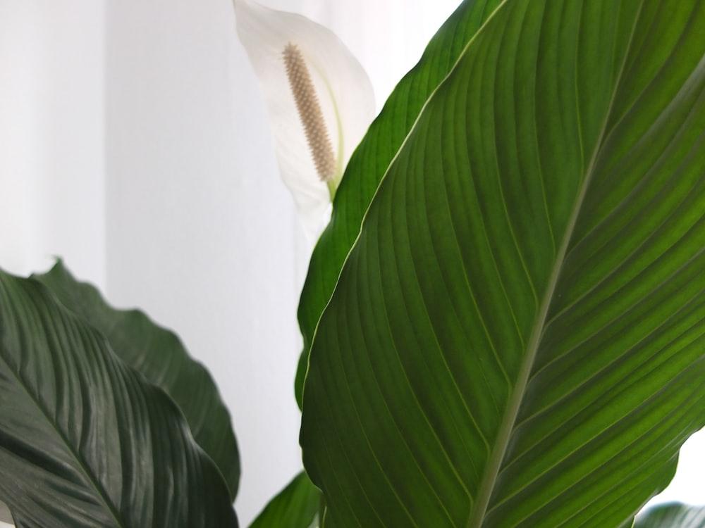 green leaf plant near white wall