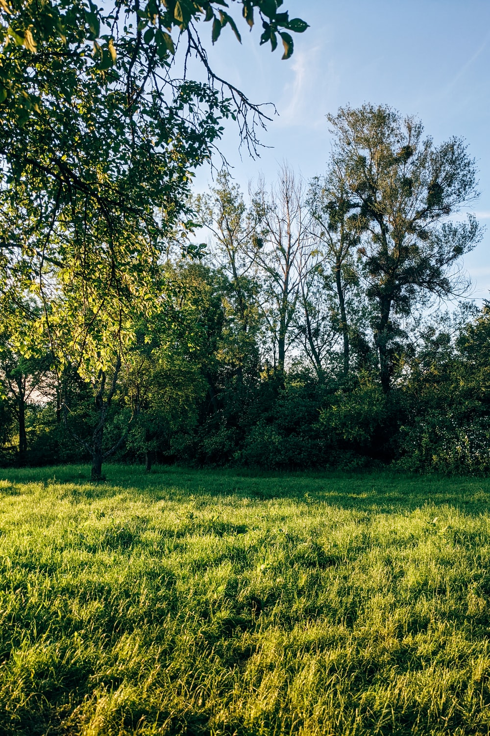 green grass field with green trees