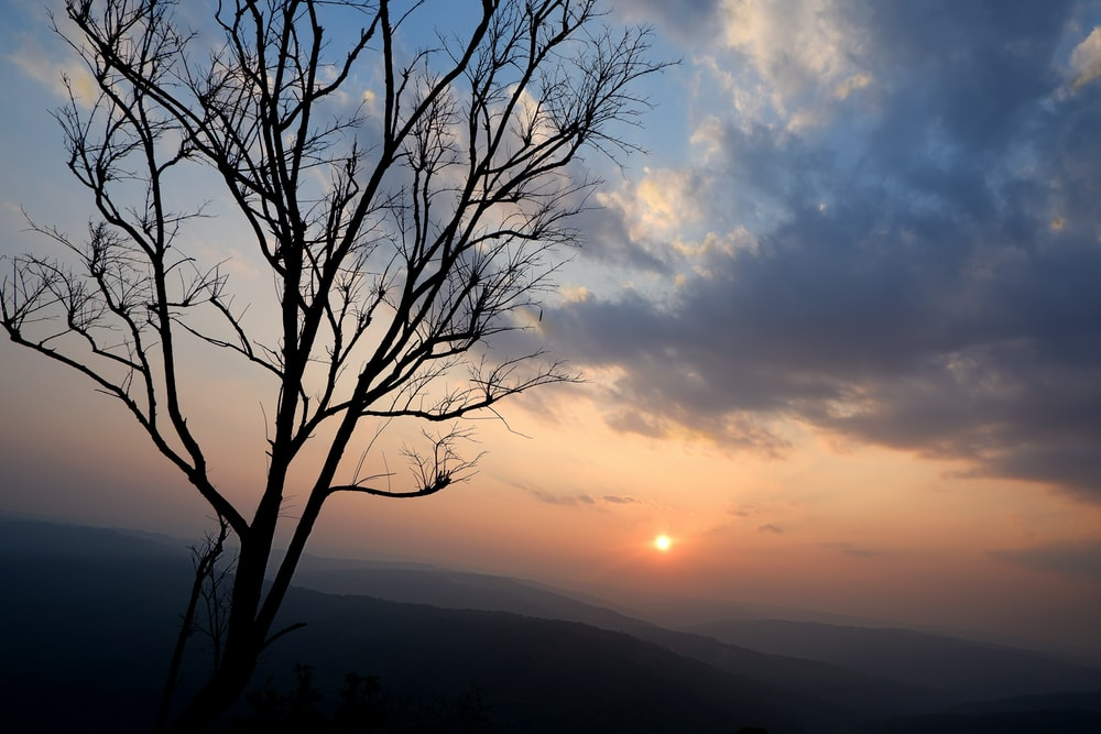 leafless tree on mountain during sunset