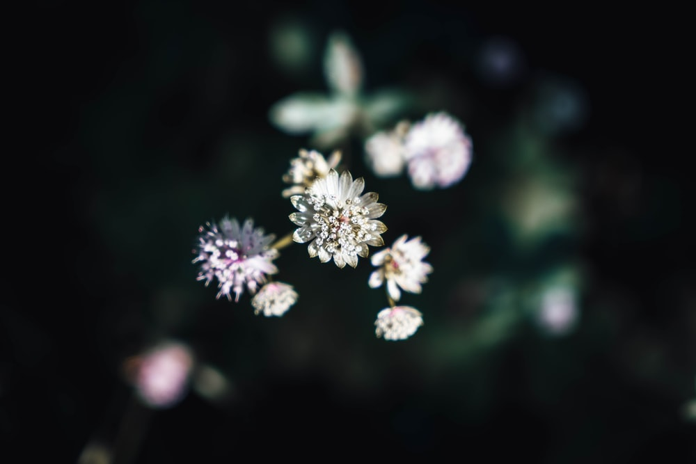 white and purple flowers in black background