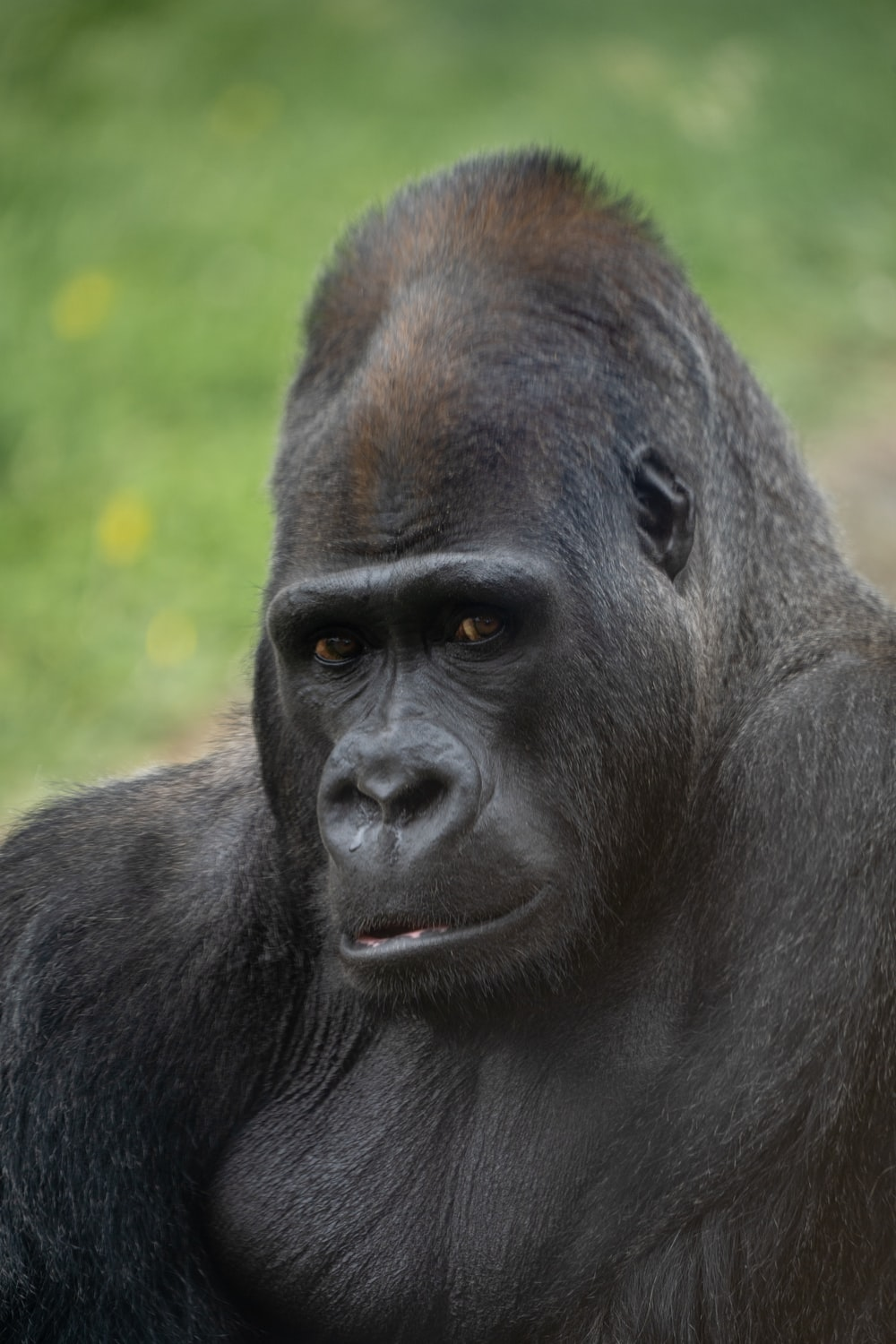 black gorilla in close up photography during daytime