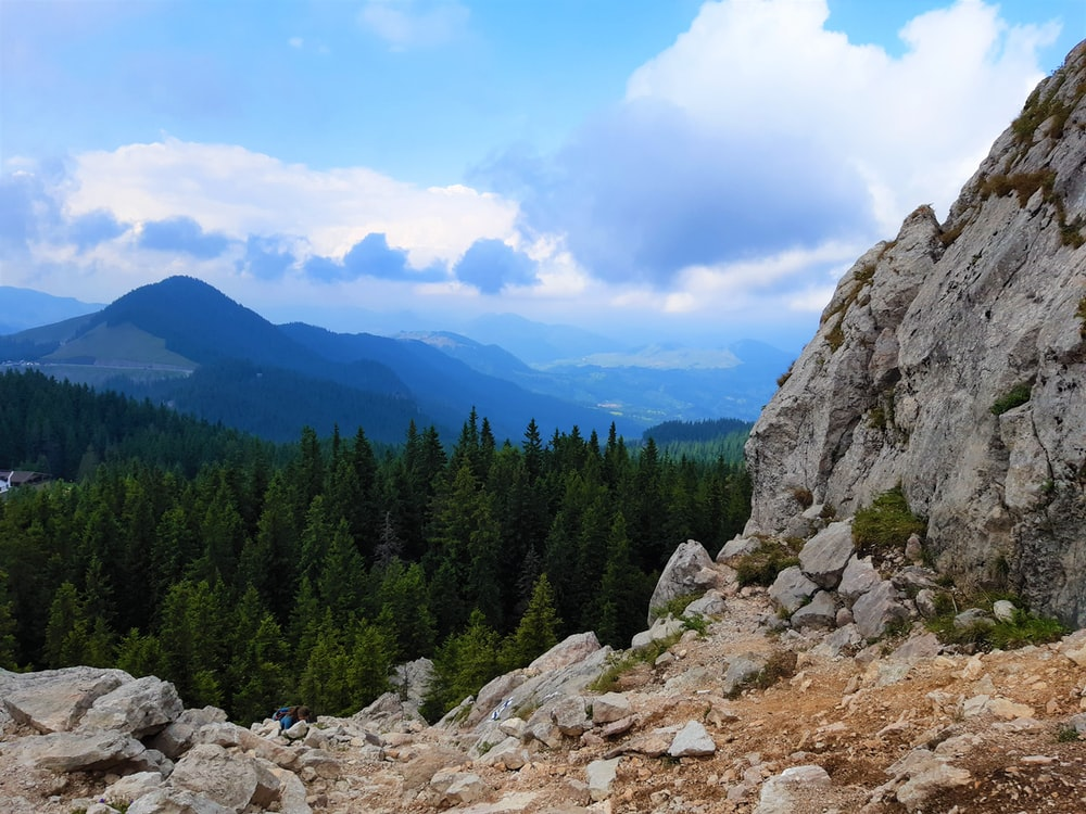 green pine trees on rocky mountain during daytime