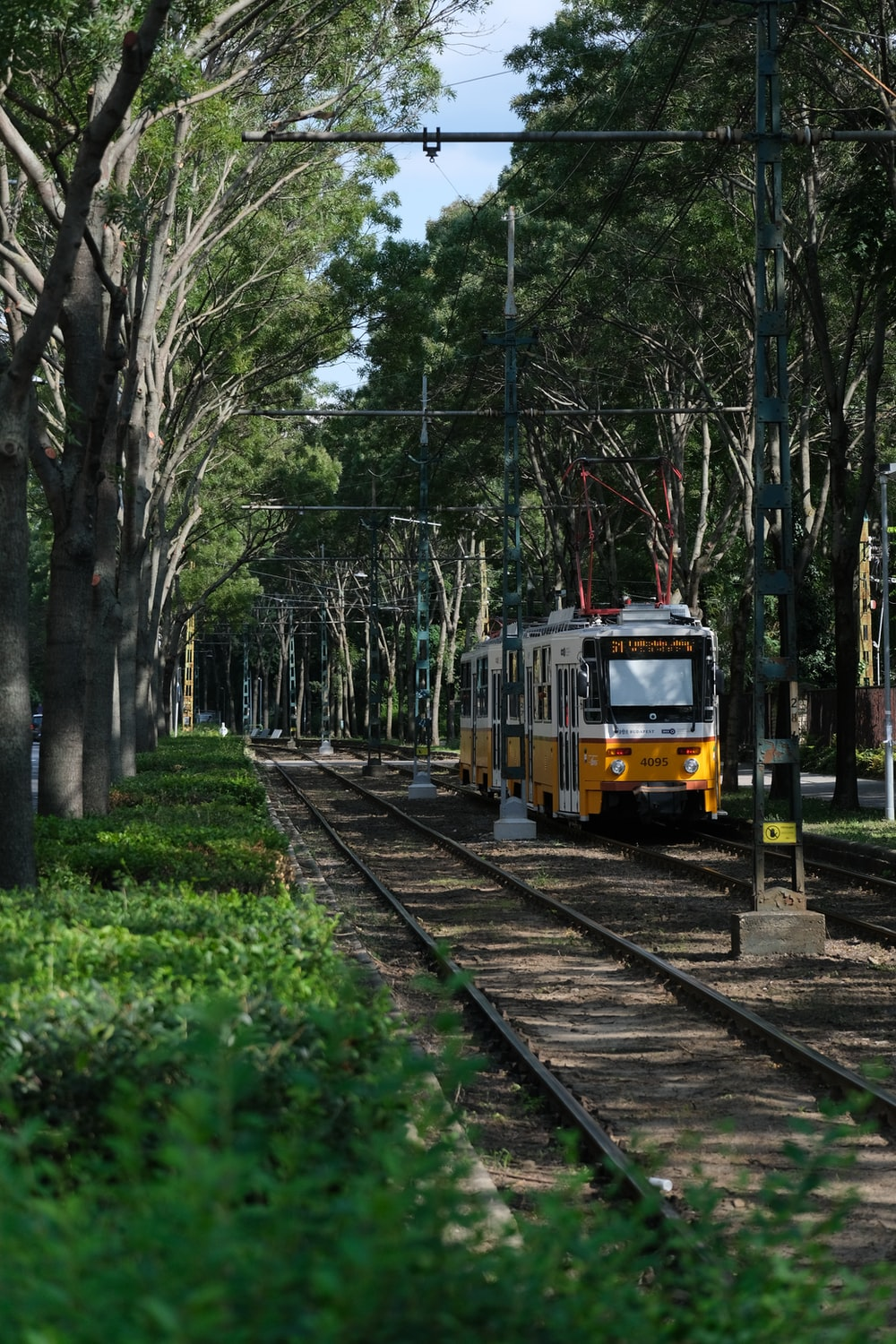 yellow and red train on rail tracks surrounded by green trees during daytime