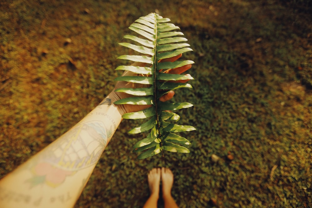 green and brown plant on persons hand