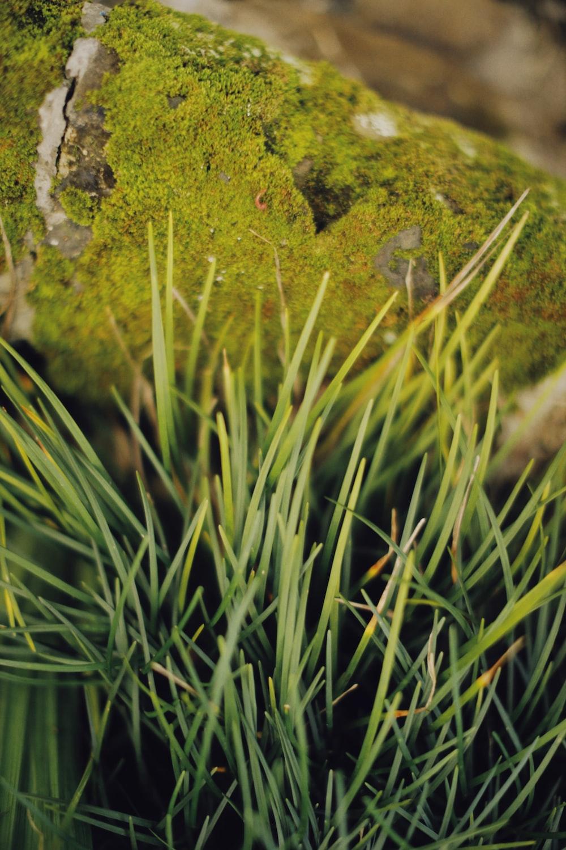 green grass with green moss