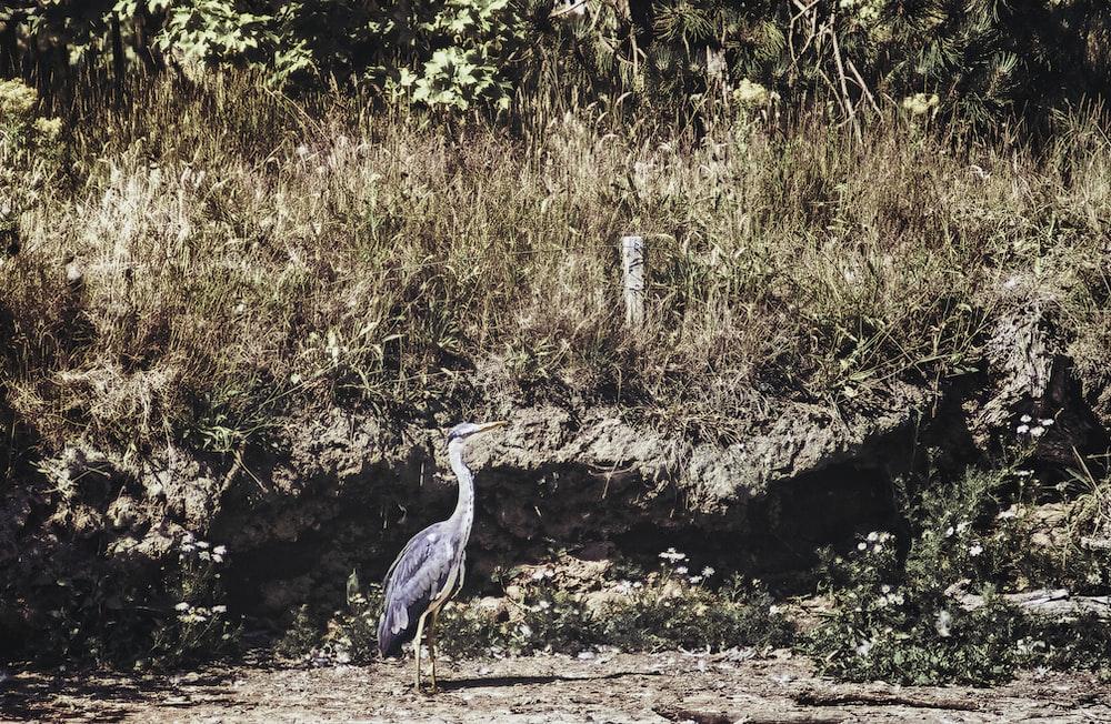 grey heron on brown dirt ground during daytime