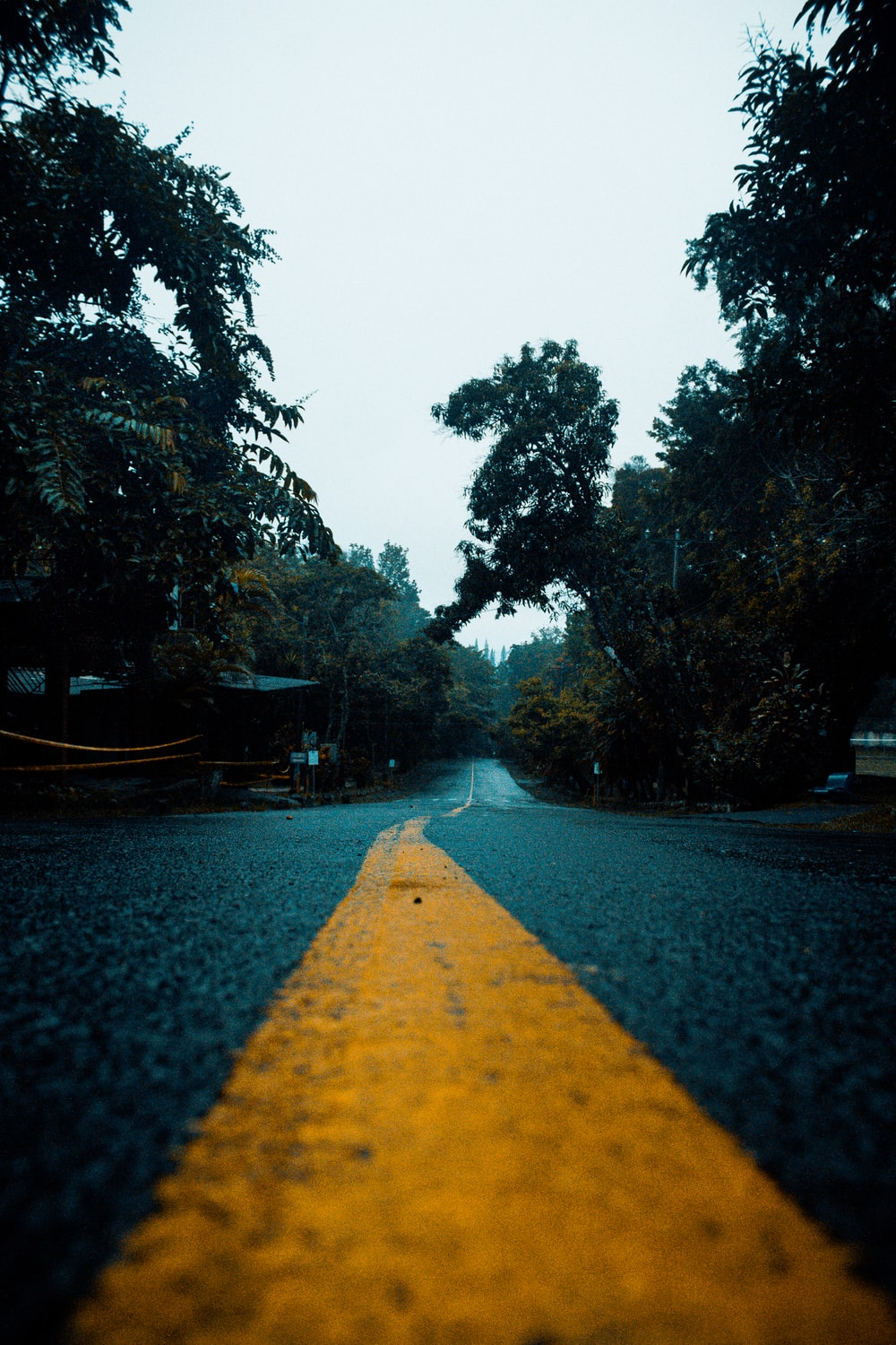yellow line on gray asphalt road between green trees during daytime