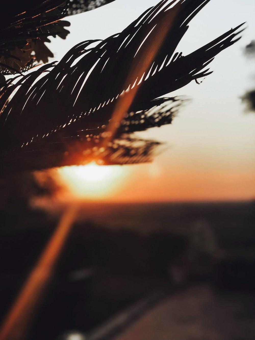 brown leaf during golden hour