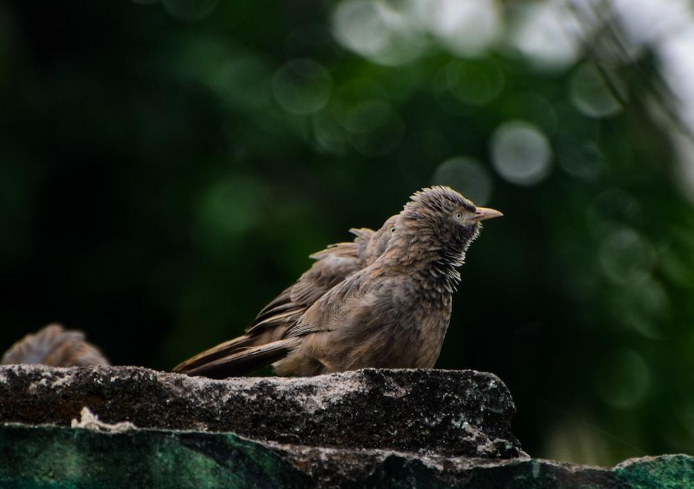 brown bird on black rock during daytime
