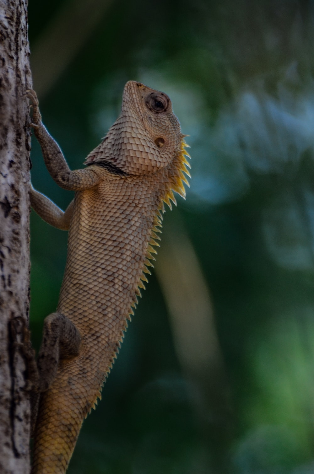 brown and yellow bearded dragon on brown tree branch during daytime