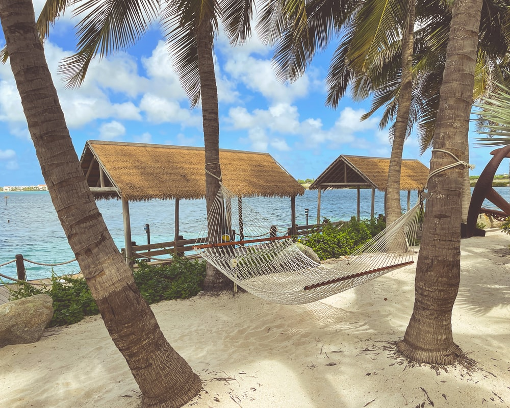 brown wooden beach house near palm trees under blue sky during daytime