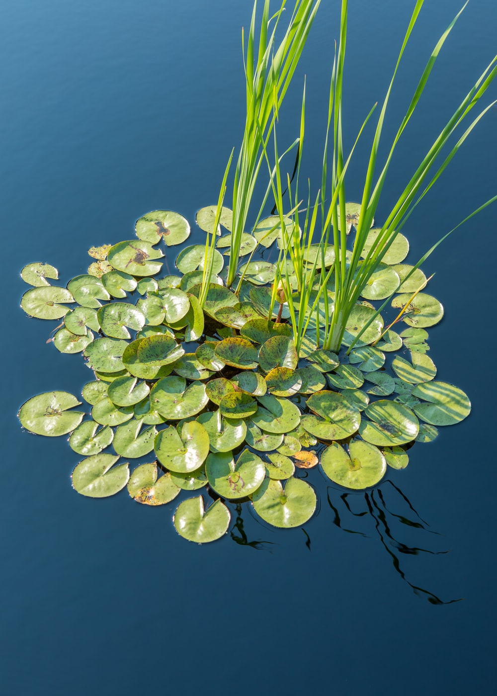 green and white plant on water