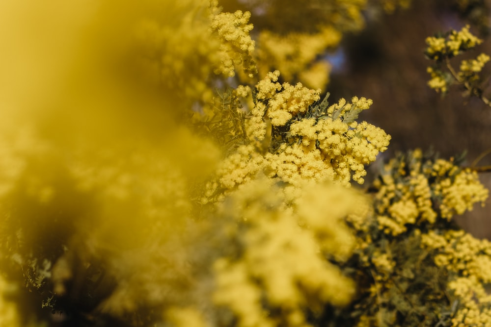 yellow and white flower in close up photography