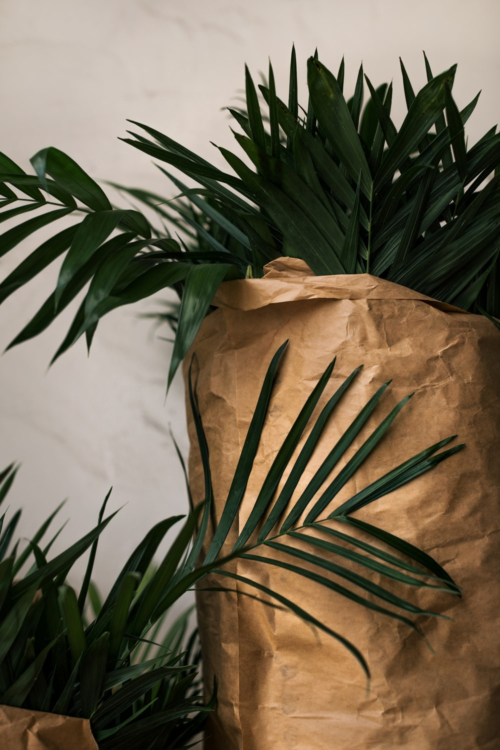 green plant beside brown textile