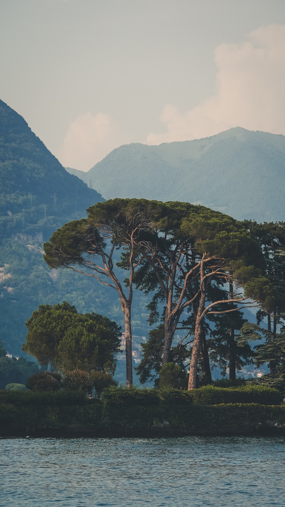 green trees on mountain during daytime