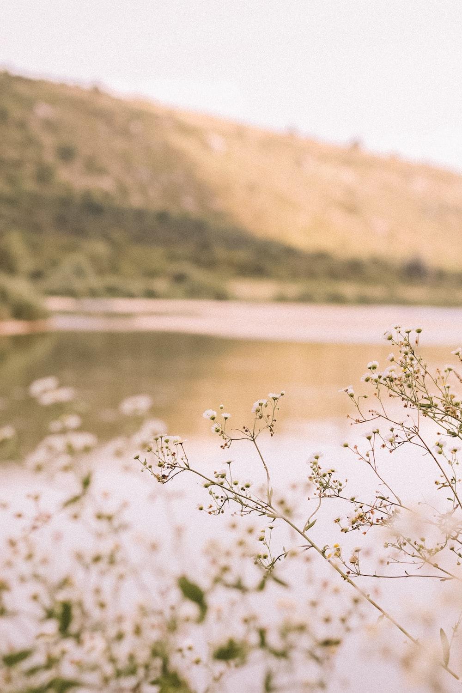 white flowers near lake during daytime