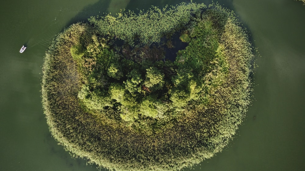 aerial view of green trees on island during daytime