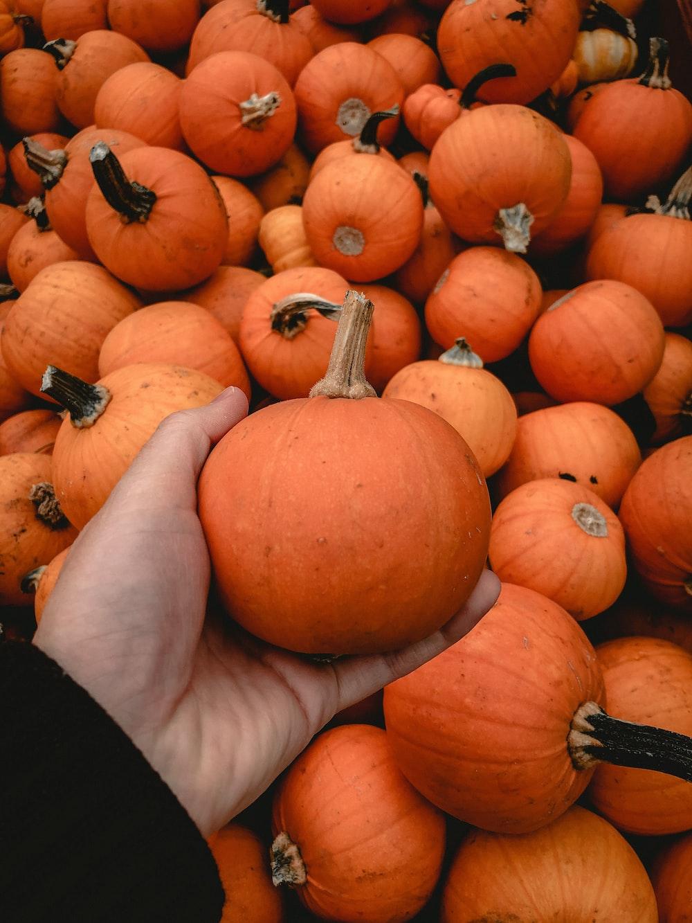 orange pumpkin on black textile