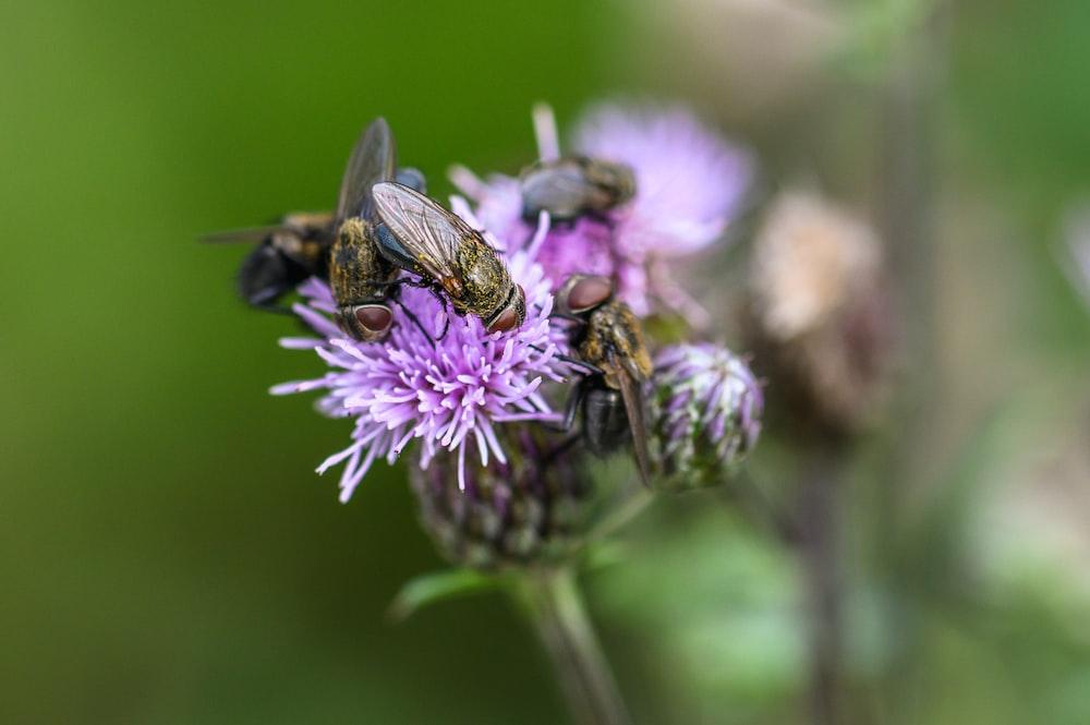black and brown bee on purple flower