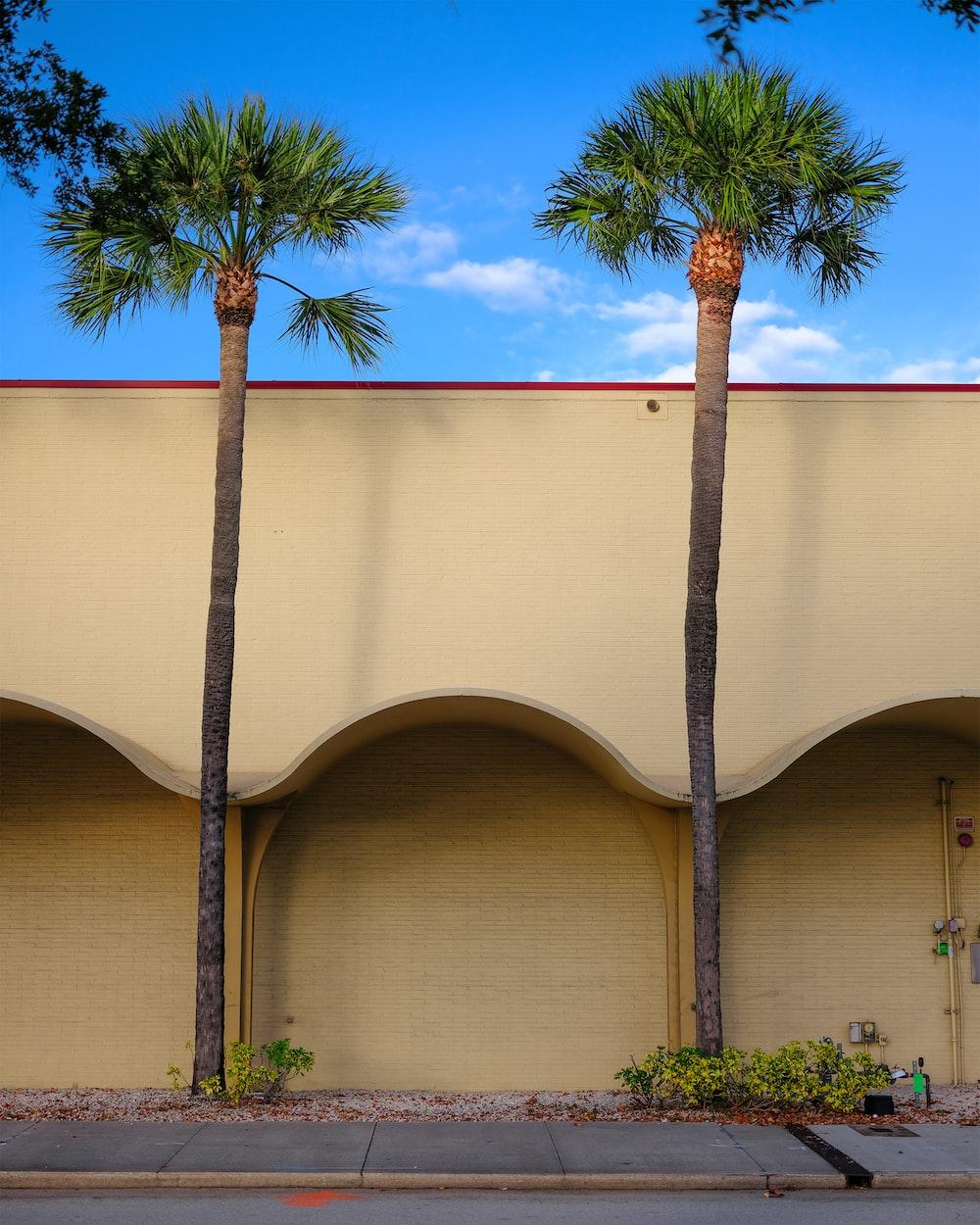 palm tree beside beige concrete building