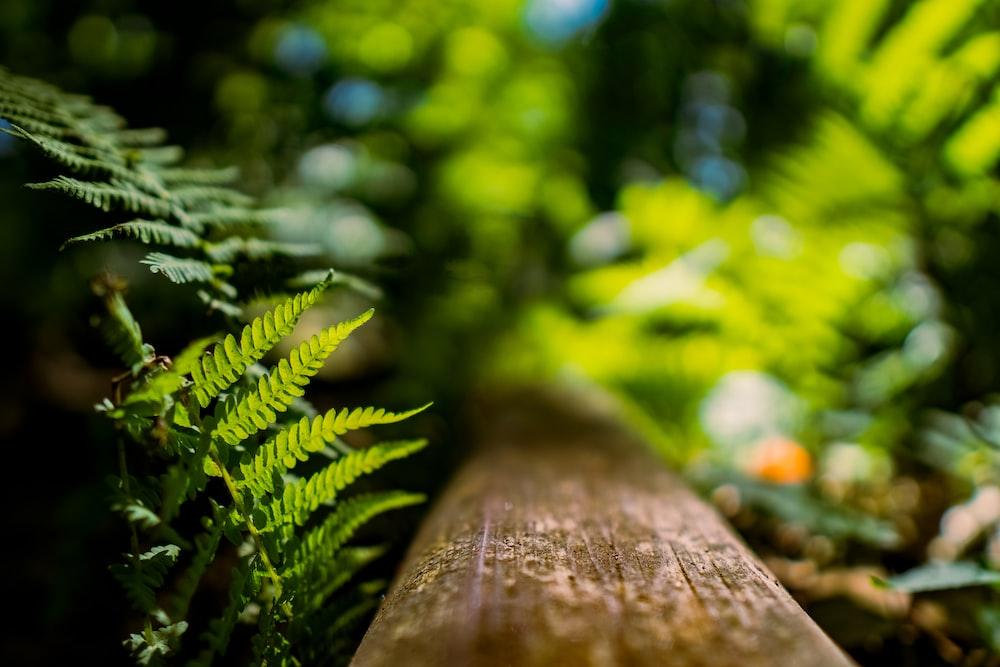 brown wooden log in tilt shift lens