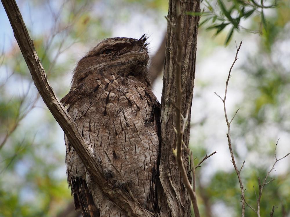 brown bird on brown tree branch during daytime