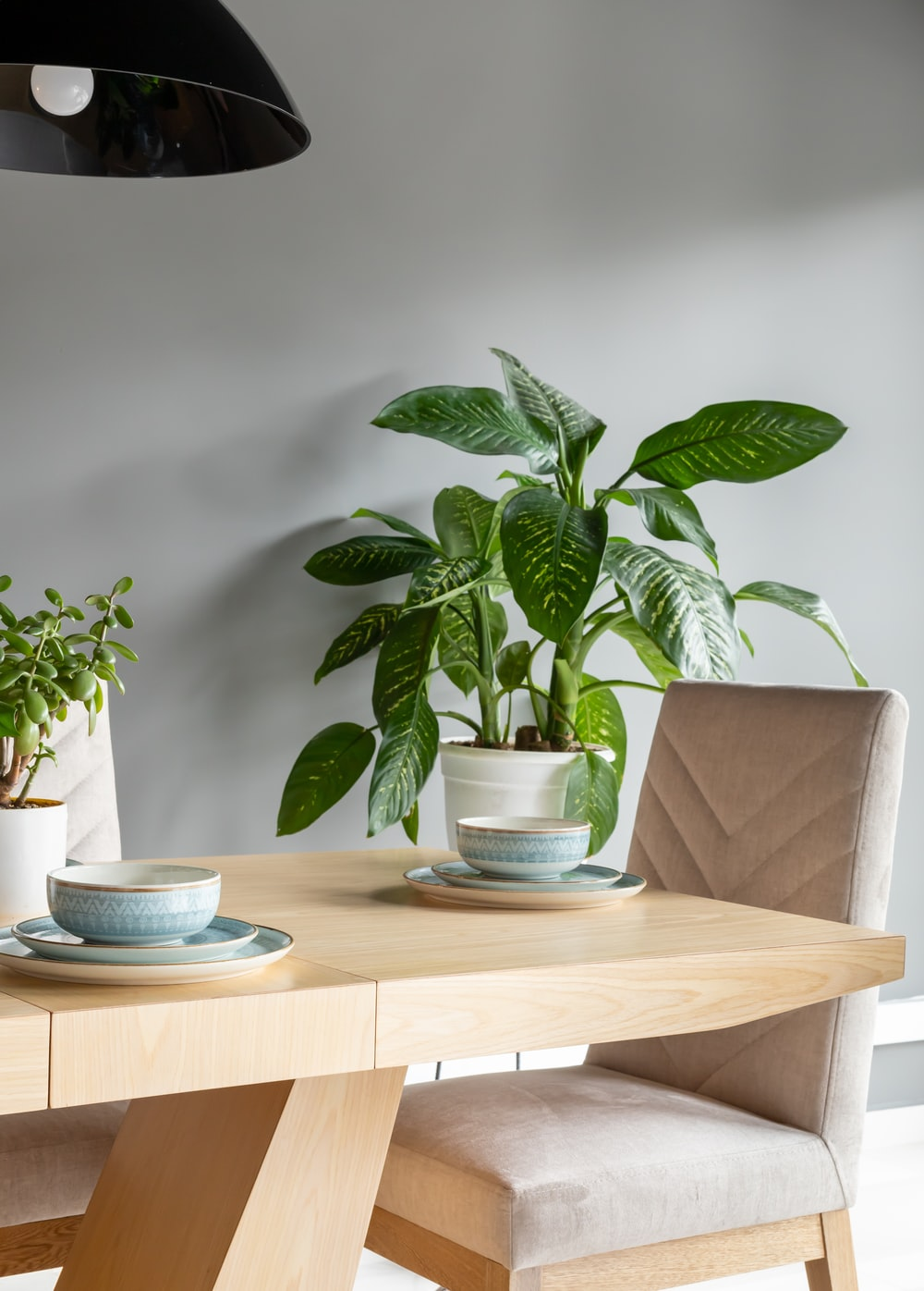 green plant on white ceramic bowl on brown wooden table