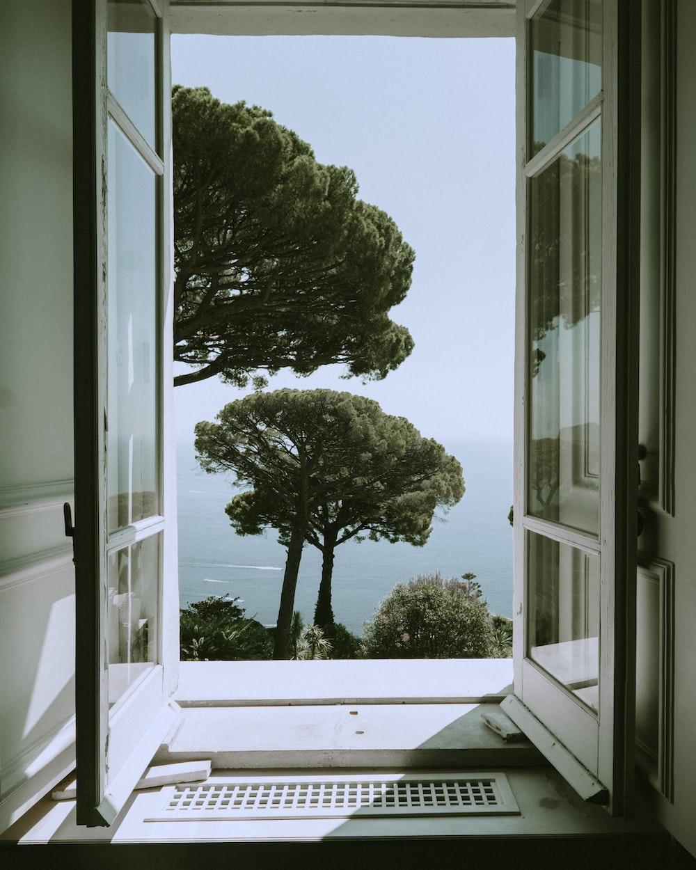 green tree beside white wooden framed glass window