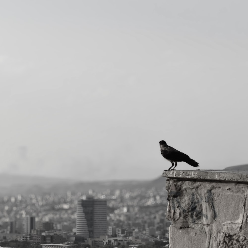 black bird on top of a building